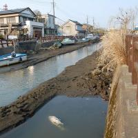Guest post: How the Japanese earthquake may drastically impact freshwater ecosystems