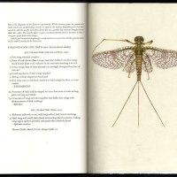 Mayflies of the Driftless Region