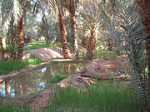 Desert Oasis (commons)