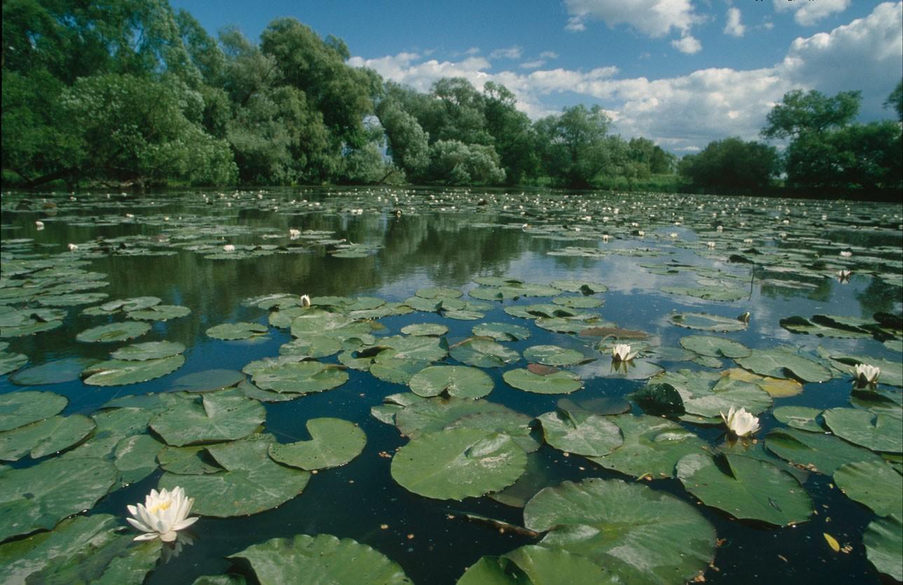 Fresh Water Ecosystems 85
