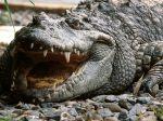 Siamese Crocodile Vietnam