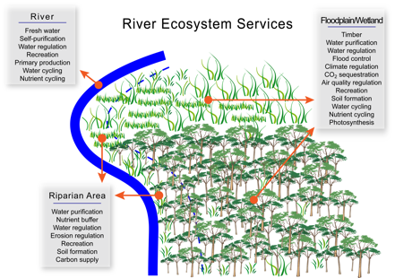 River Ecosystem Services