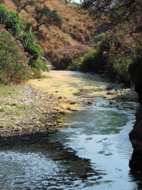 Mediterranean rivers and streams are unique both in their climatic conditions and their biodiversity. Photo courtesy Núria Bonada