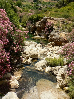 Mediterranean rivers and streams are unique both in their climatic conditions and their biodiversity. Photo courtesty Núria Bonada