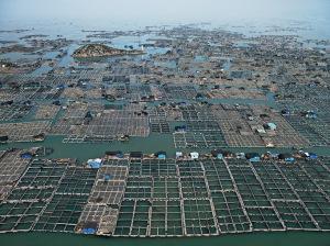 Marine Aquaculture #1, ©Edward Burtynsky. www.edwardburtynsky.com