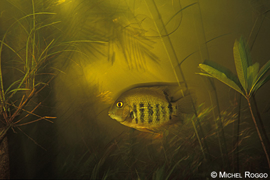 Flooded forest of the Rio Tabajos, Amazon, Brazil, 1992