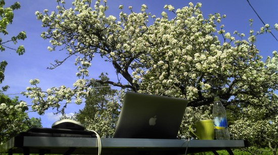 A Swedish spring: the perfect working environment (photo: Sebastian Birk)