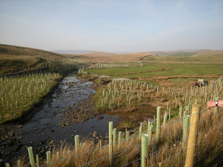 Cam Beck tree planting for the 'Keeping Rivers Cool' project.  Image: Ribble Rivers Trust