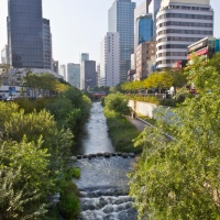 Daylighting Urban Rivers