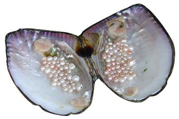 Freshwater pearls.  Image: riverdee.org.uk