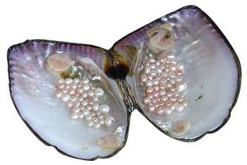 Freshwater pearls.  Image: riverdee.org.uk