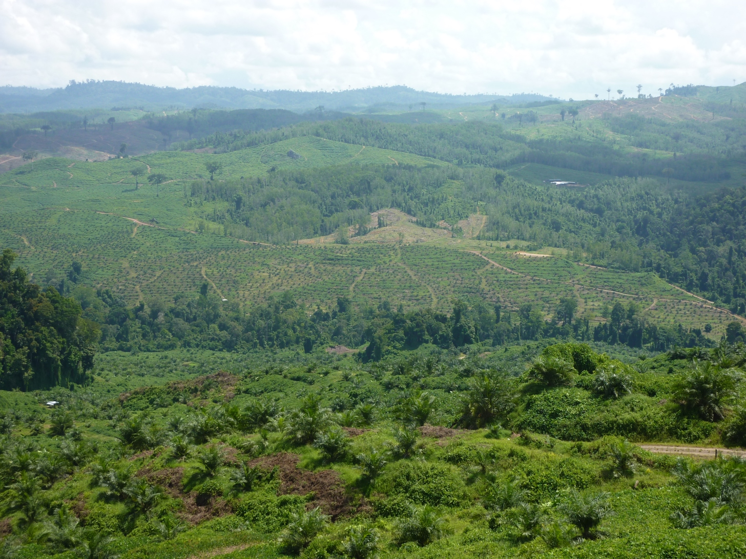 Riparian zone in the oil palm landscape.  Image: Claudia Gray
