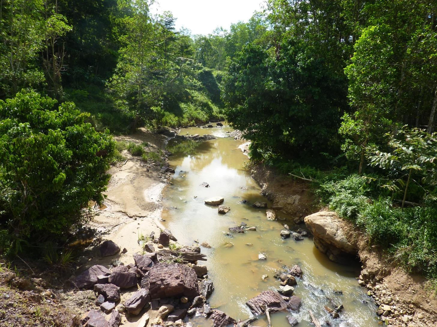River riparian zone in oil palm plantation, Sabah, Malaysia.  Image: Claudia Gray