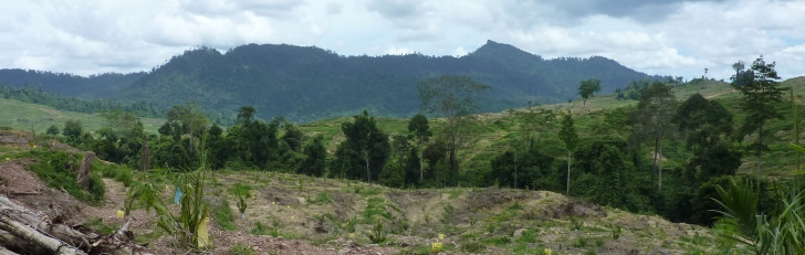 Riparian zone through a Malaysian oil palm landscape.  Image: Claudia Gray