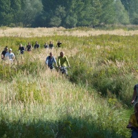 When is river restoration rewilding?