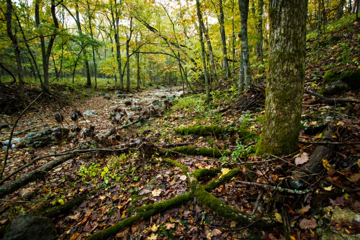 A seasonally dry stream in a forest in Missouri, USA. Image: Kyle Spradley