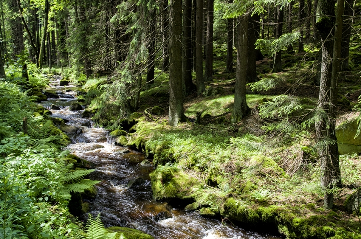 A forest stream in the Czech Republic Image: Dominique Cappronnier | Flickr Creative Commons