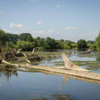Restoration of the Lippe River in Germany doubles fish populations