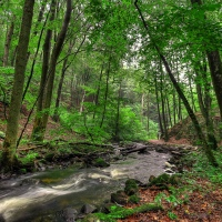 OSCAR: the ecological benefits of woody riparian buffers