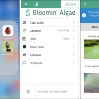 Bloomin' Algae: a citizen science app to track algal blooms
