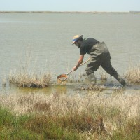 Invasive water boatman alters the coexistence of native species in Spanish and Moroccan freshwaters