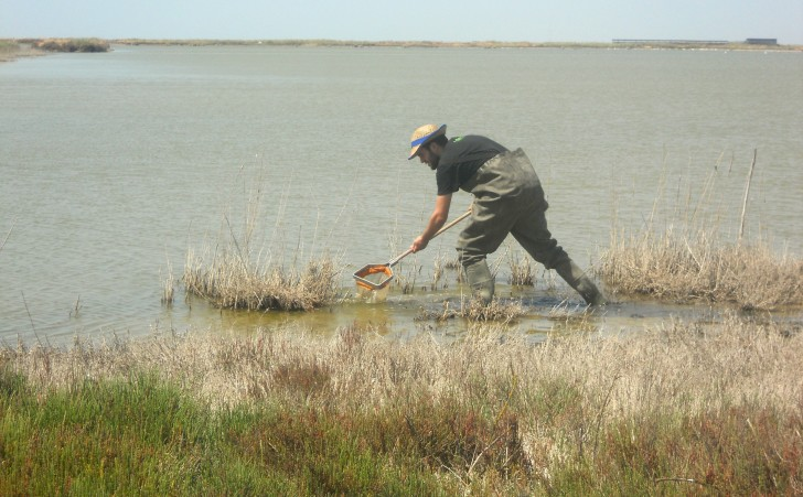 Fig. 4 collecting samples