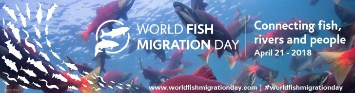 web-banner-2-world-fish-migration-day-2018-01