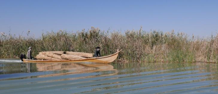 iraq wetland