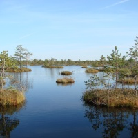 Over a third of natural wetlands lost globally since 1970