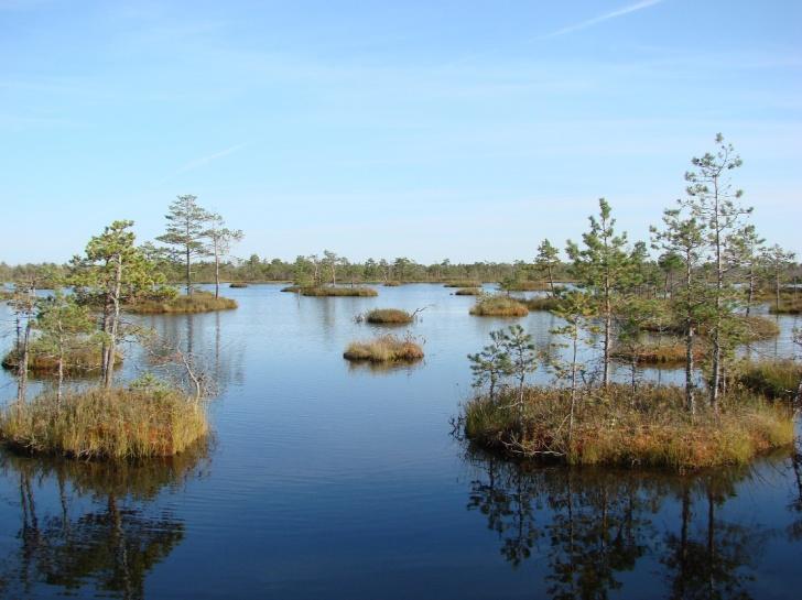 belarus wetland