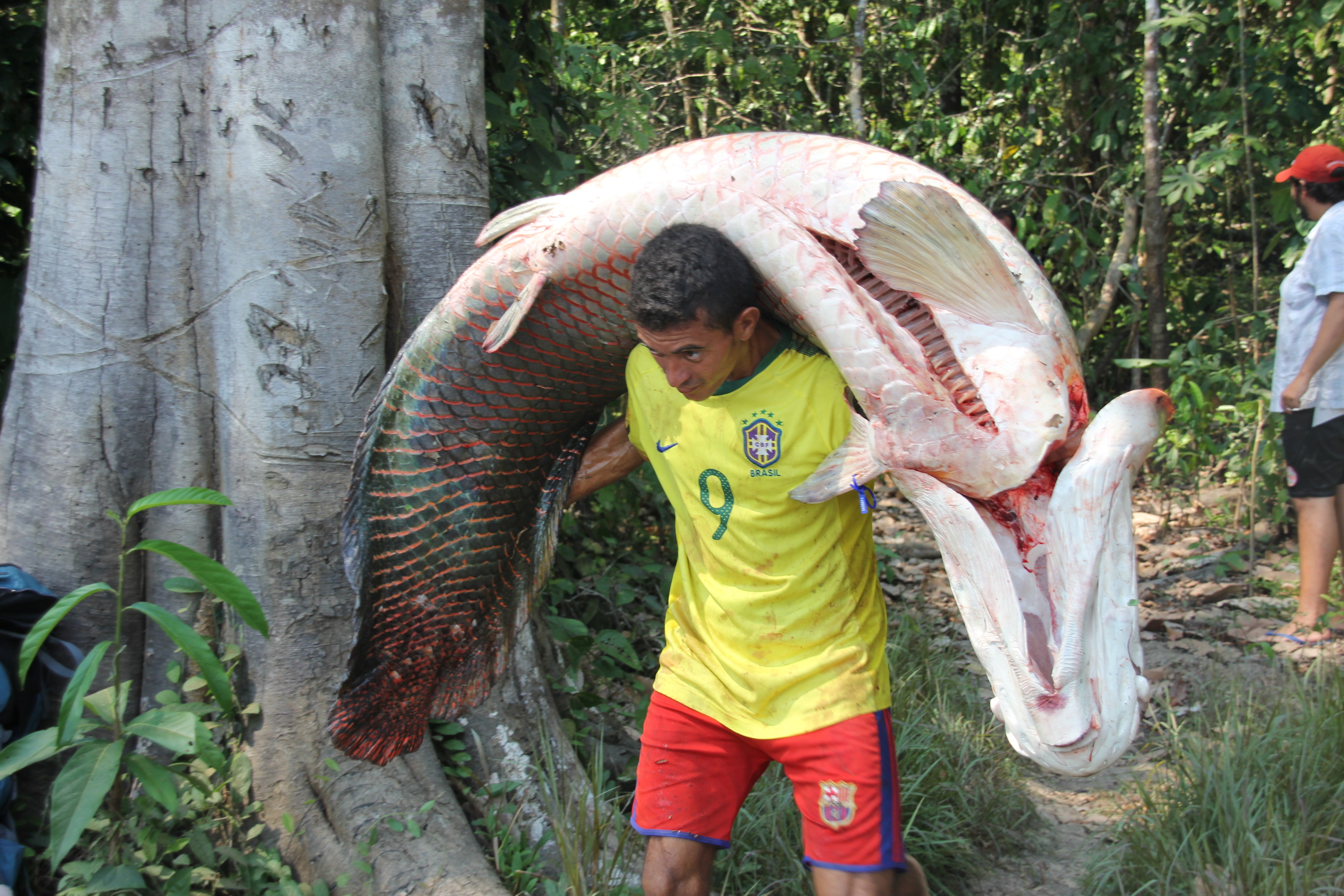 Community Based Conservation Of Arapaima And Giant Turtles