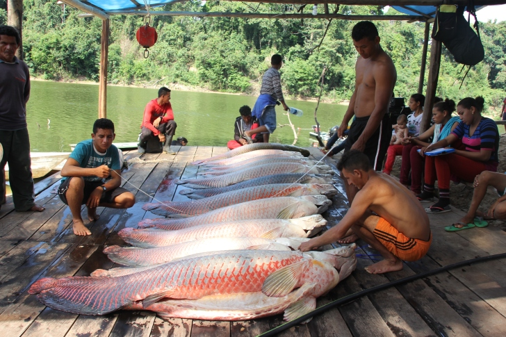 peres_community_based_arapaima_management_carlos_peres
