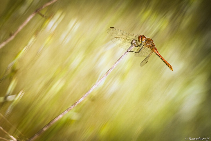 dragonfly wind