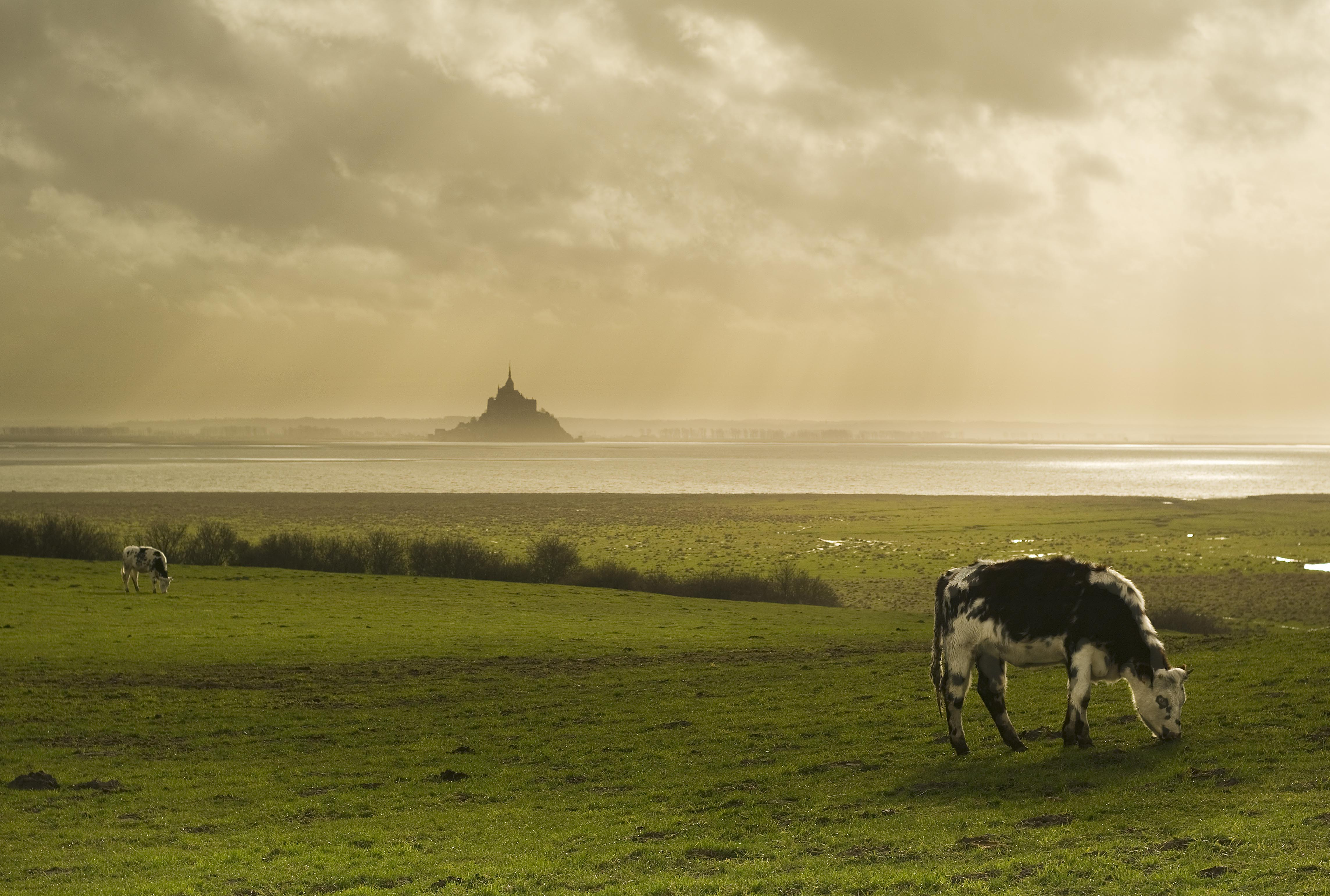 Mont St Michel at the estuary of the Sélune River