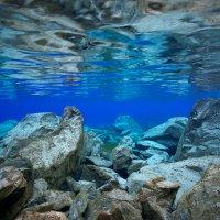 'A beautiful underwater world awash with light': Michel Roggo's Freshwater Project