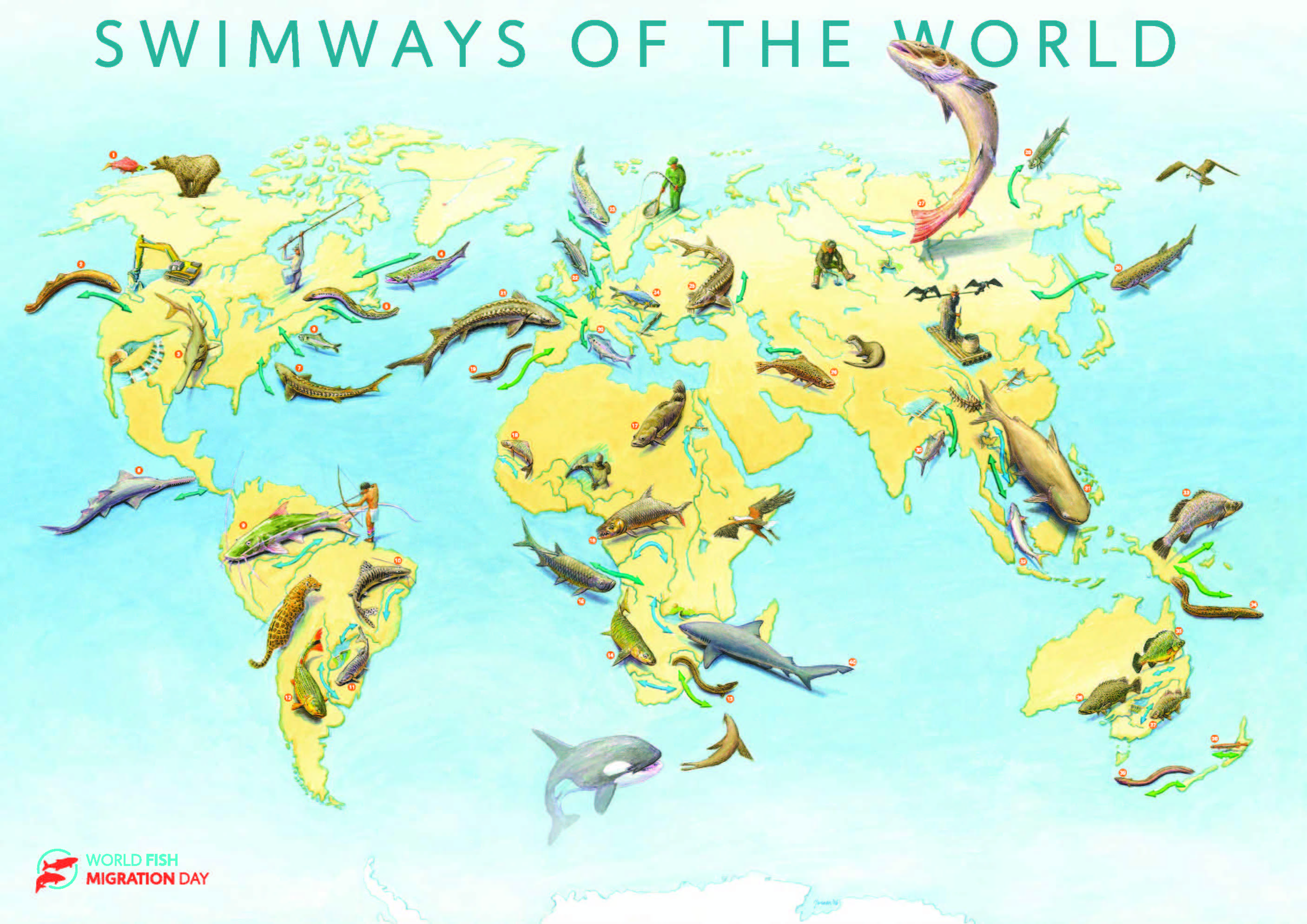 Global Swimways Conserving Migratory Fish Populations The Freshwater Blog