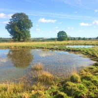 Pond creation boosts biodiversity and rare species in agricultural landscapes
