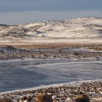 Indigenous Knowledge offers valuable insights into Arctic freshwater ecology