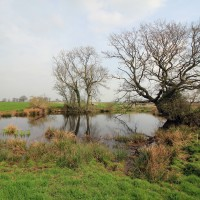 Experts urge action to protect and restore small English freshwater habitats